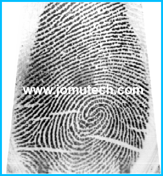 Captured Fingerprint Image before Minutiae Data is Extracted from it